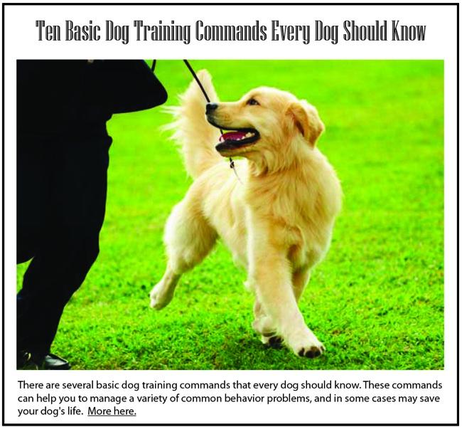 Basic Training: Training Basic Dog Commands